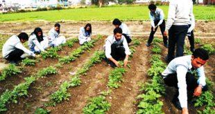 التعليم الزراعي
